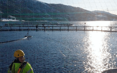 Top Norwegian Salmon Exec Ups Investment In Norcod…